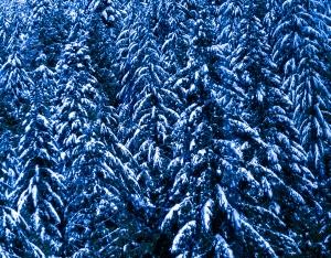 BCMC first snow-2