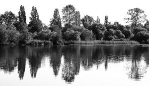 Trout Lake-8