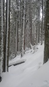 slope angle and snow covered trees