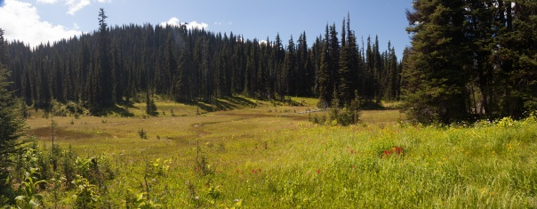 alpine-meadow-pano-e-trophy-1