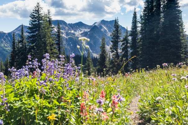 east-trophy-ridge-trail-1