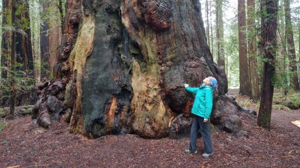 Redwoods D4-4