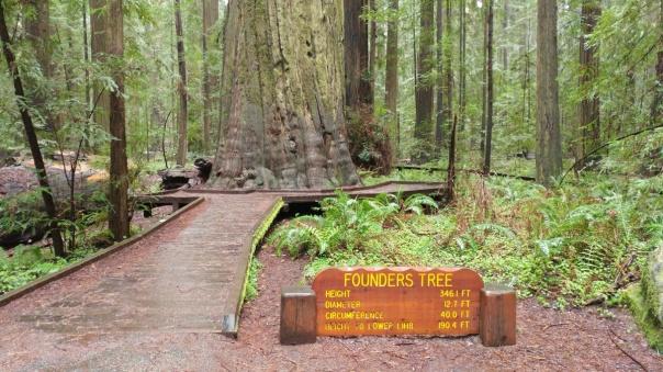 Redwoods D4-7