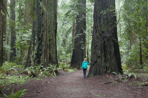 Redwoods D4-9